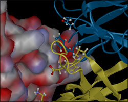 Active Site in Protean 3D