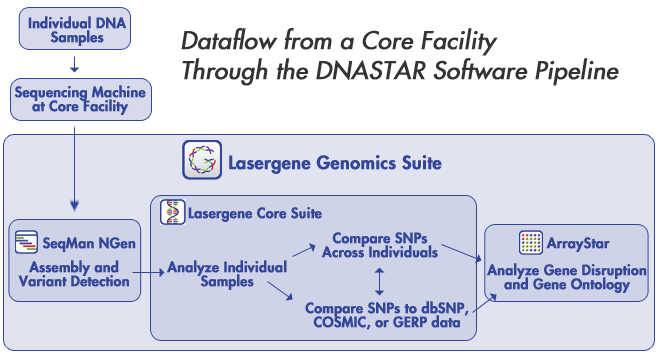 DNASTAR Lasergene Genomics Suite Next-Gen Sequencing Software in Core Facilities, Assembly and Variant Detection, Compare SNPs across individuals, compare SNPs to dbSNP, COSMIC, or GERP data, Analyze Gene Disruption and Gene Ontology