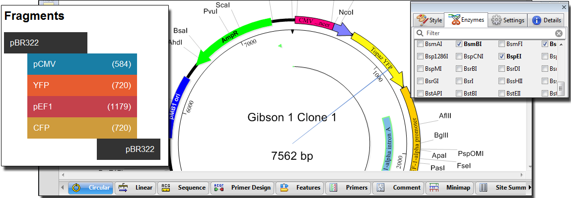 Plasmid Design Software