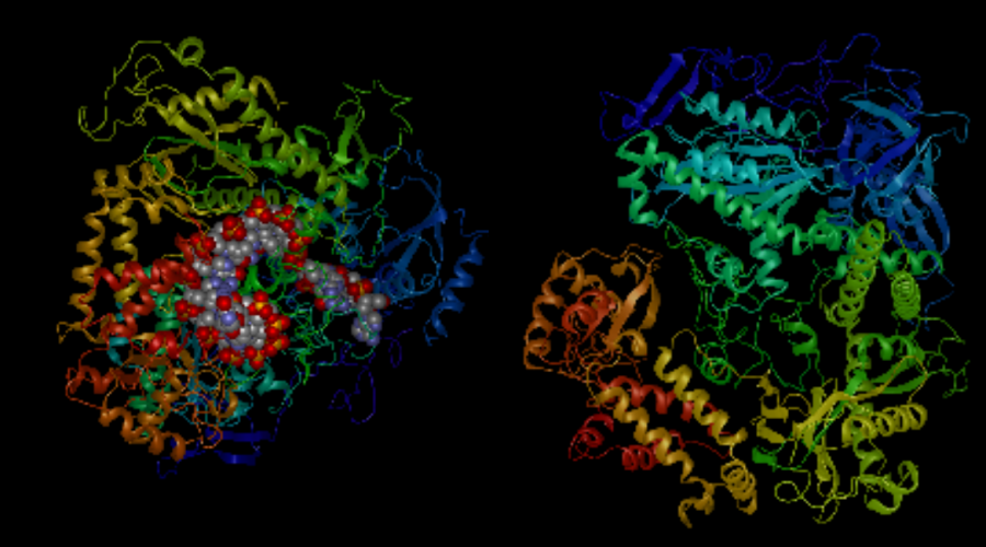 Four things you can learn about a protein using function prediction in NovaFold