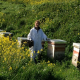 7 Questions for Honey Bee Genetics Researcher, Dr. Julia Jones